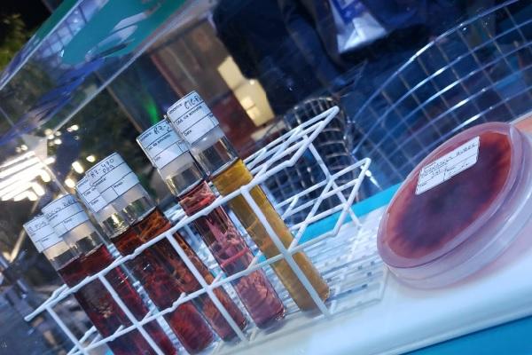 Pesquisa vai desenvolver corantes cosméticos a partir de microrganismos
