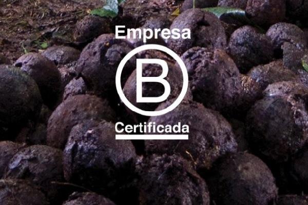 Natura é reconhecida internacionalmente com certificação B Corp – empresas melhores para o mundo