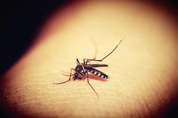 Estudo científico busca estratégia para conter a proliferação do mosquito transmissor da malária