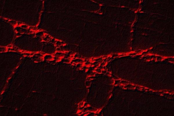 Estudo identifica automaticamente doenças degenerativas em imagens