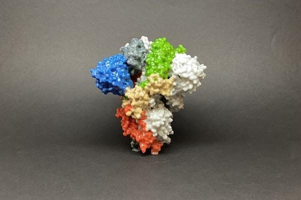 Segundo pesquisadores, droga anticoagulante poderia tratar variantes emergentes do novo coronavírus